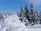 Обсуждаем: Успеть до конца зимы